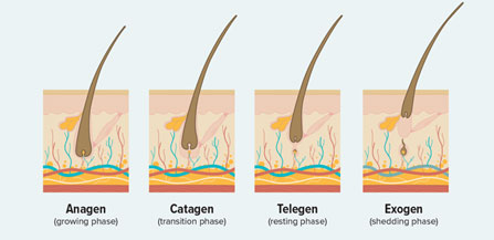 Hair Grown Cycle