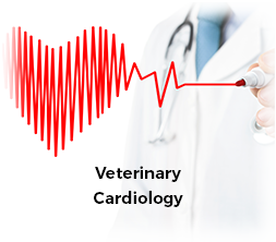 Veterinary Cardiology